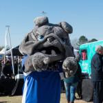 Citadel's Bulldog mascot